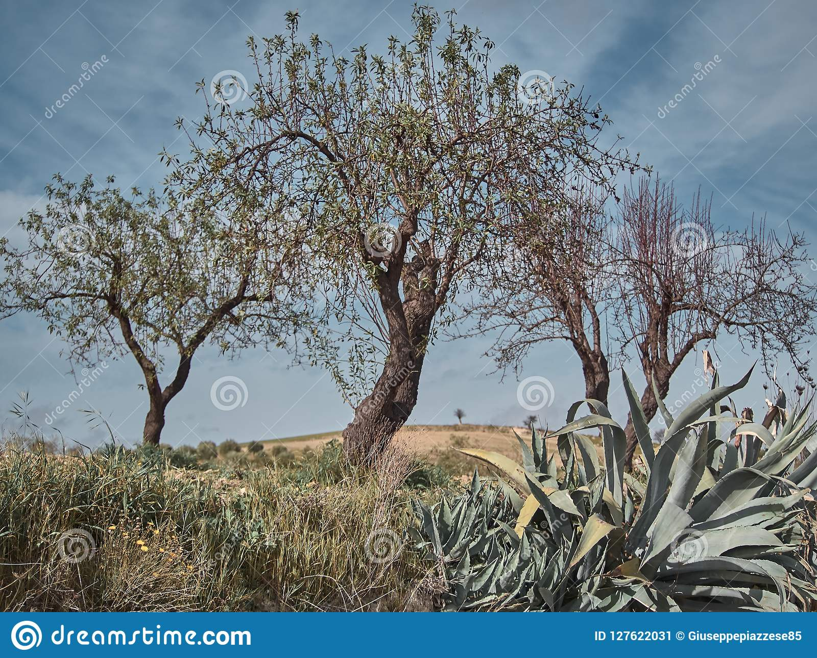 Sparato di un ambiente rurale con di olivi