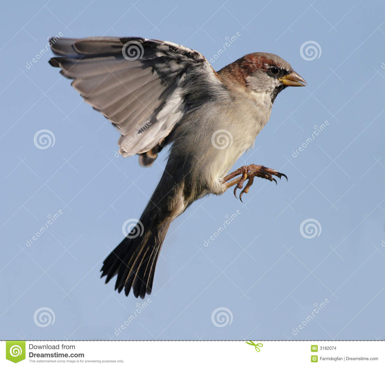 Sparrow Stock Images - Image: 3182074