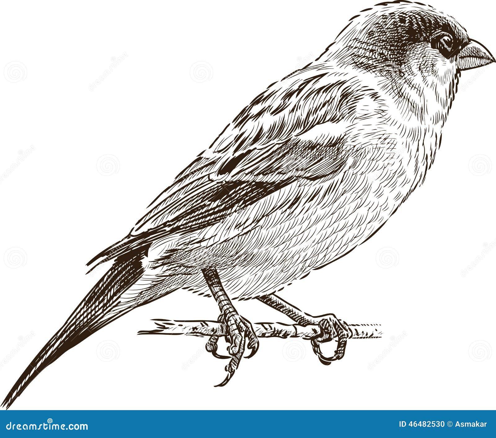 Sparrow on branch stock vector. Illustration of legs ...