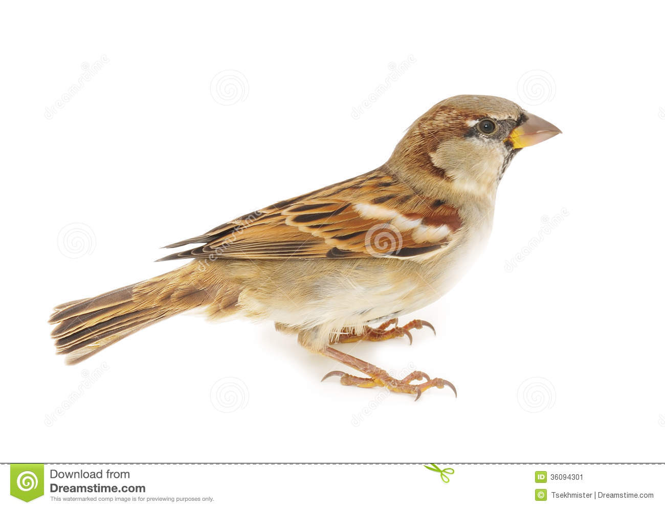 Flying sparrow animated - photo#20