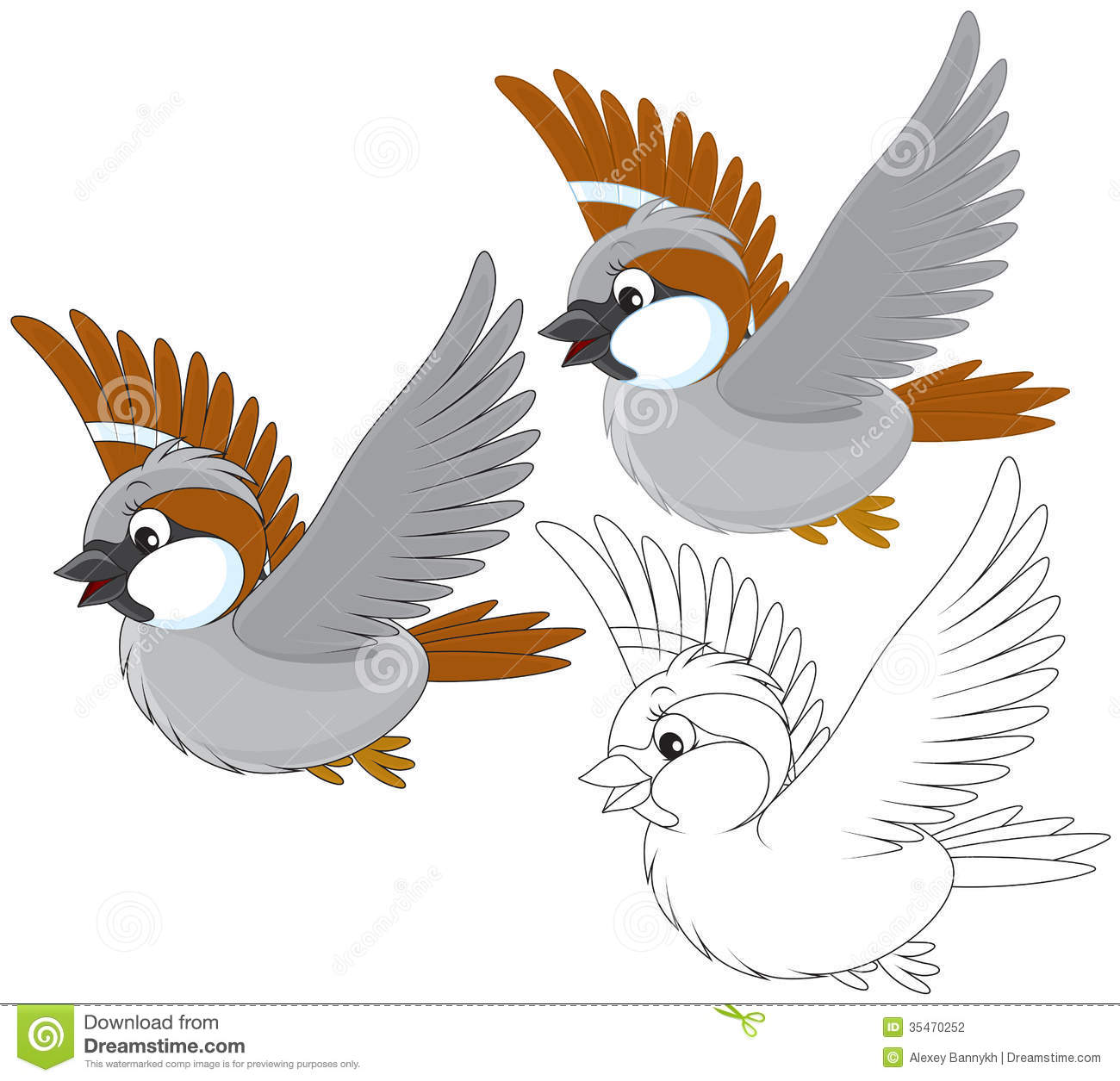 Sparrow Stock Photography Image 35470252