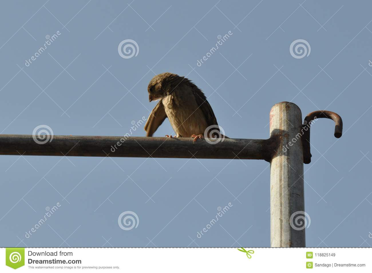 Sparrow perched on rusty wire fence