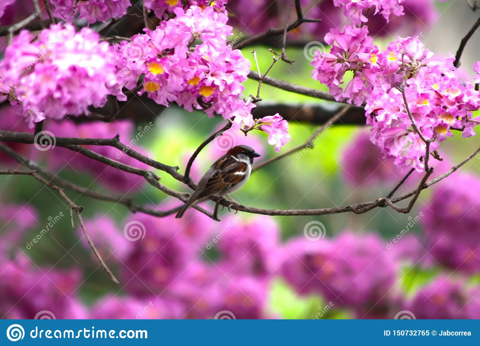 Sparrow among violet flowers