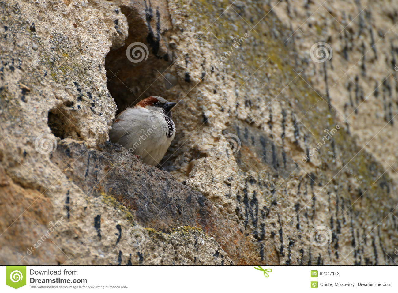 Sparrow in the wall