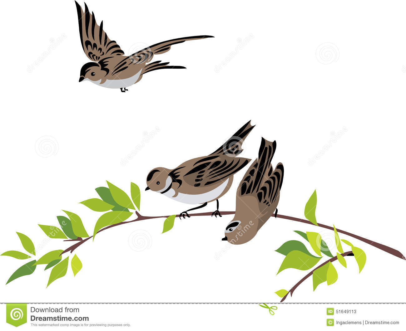 Flying sparrow animated - photo#7