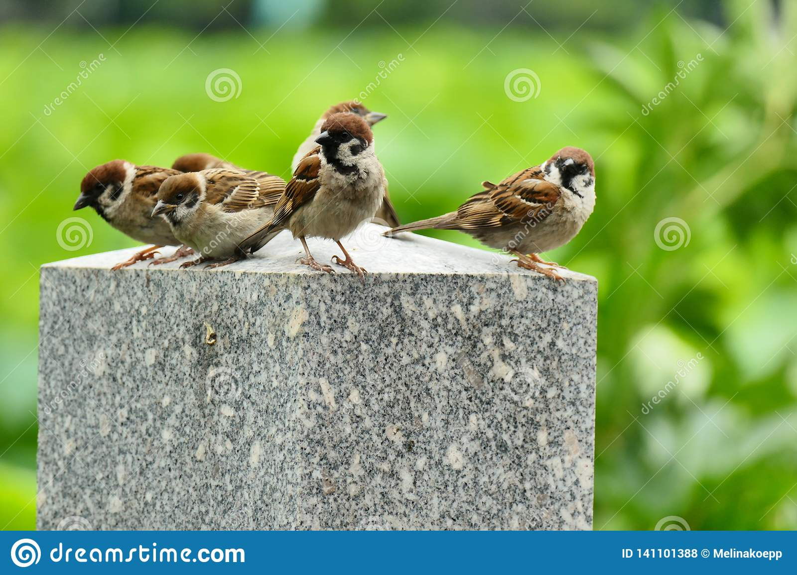 Sparrows on a stone pillar in Ueno Park, Tokyo, Japan