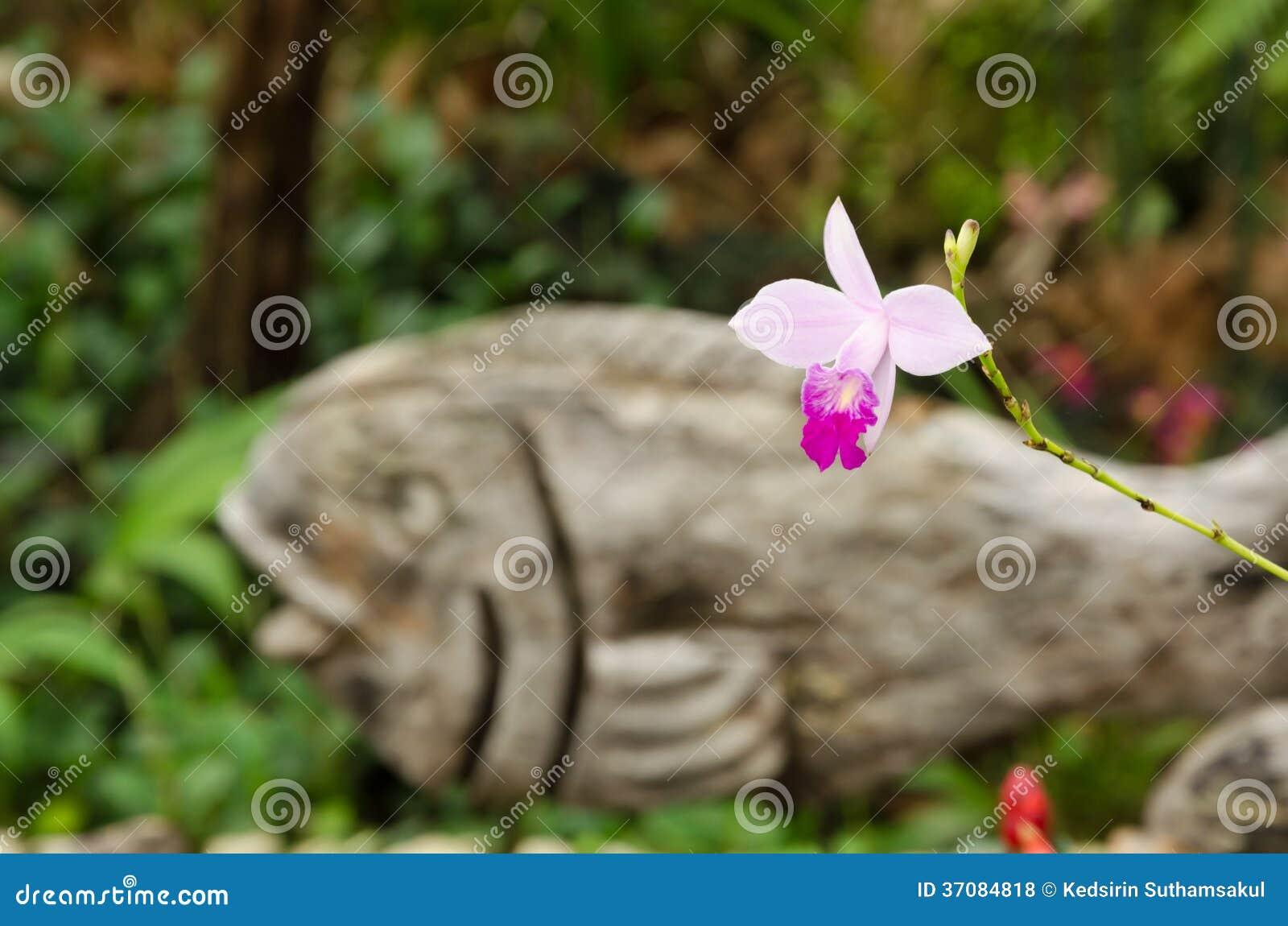 Download Spathoglottis Orchidea W Storczykowej Szklarni Zdjęcie Stock - Obraz złożonej z świeży, dekoracje: 37084818