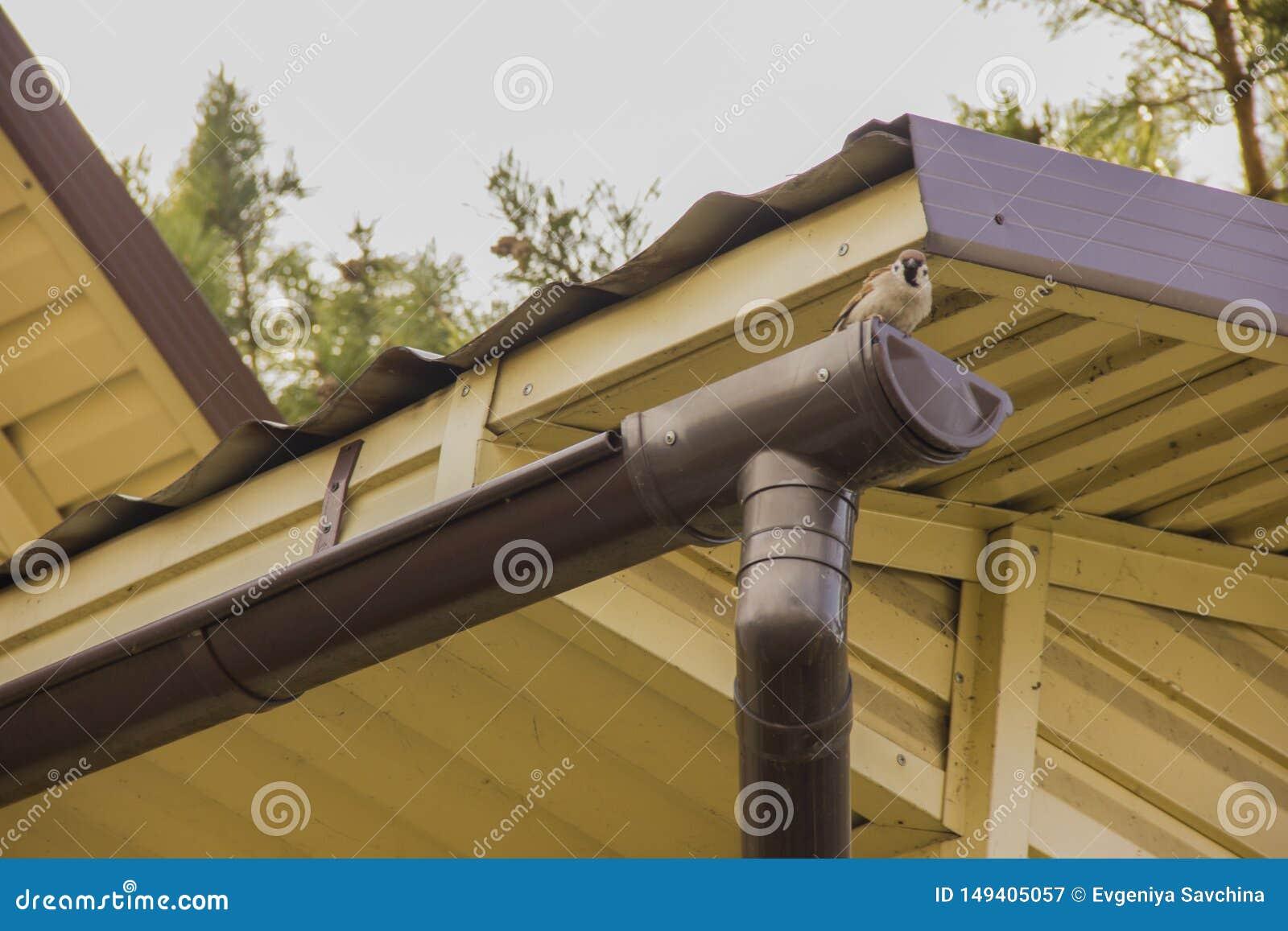 Spatz sitzt auf der Gosse nahe dem Dach gegen den Himmel