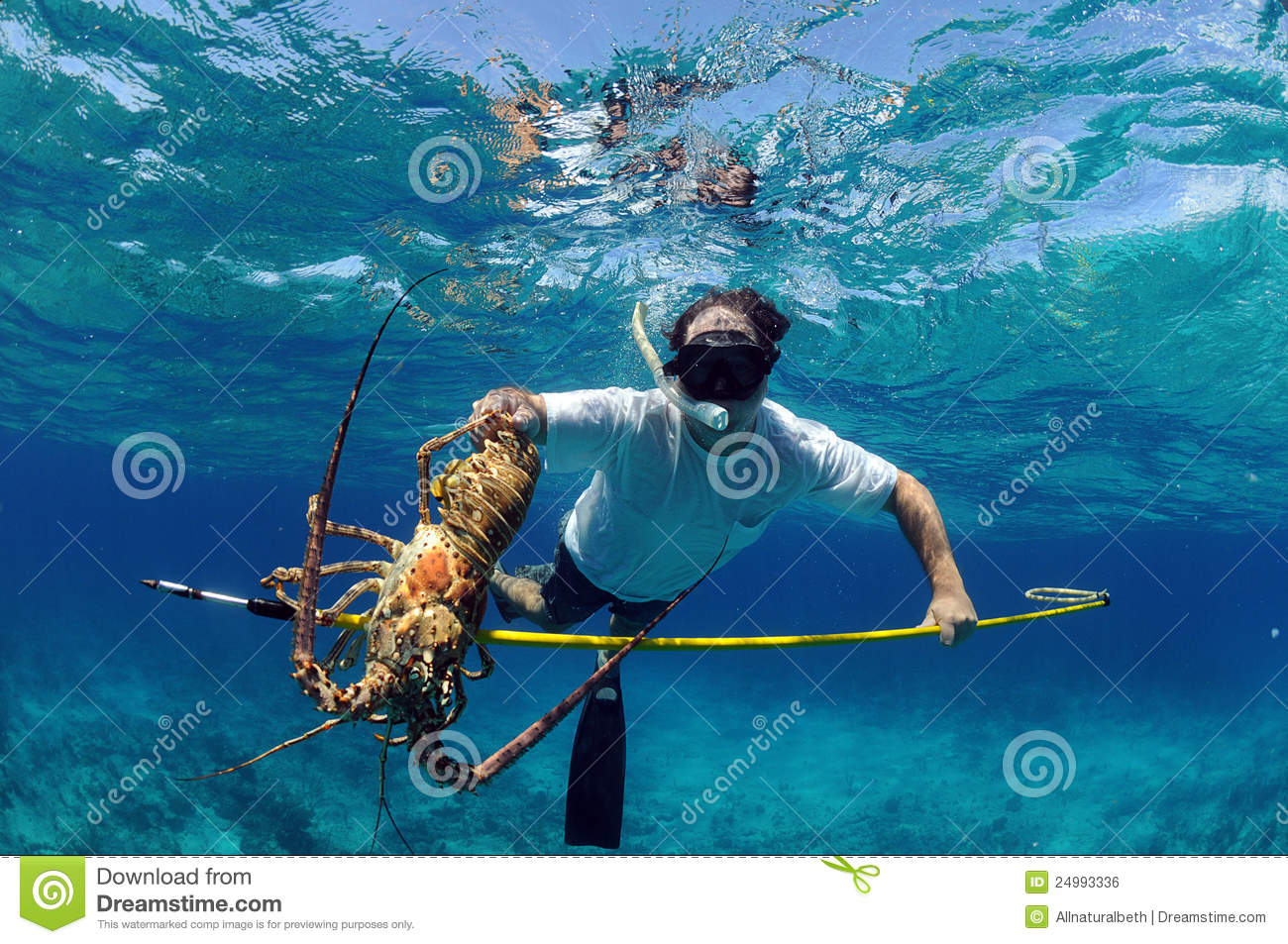 Underwater image of man catching lobster on a speargun while free ...