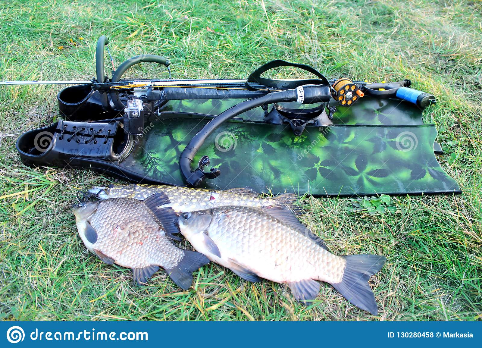 Spearfishing  Underwater Gun, Fins And Fish On The Grass On