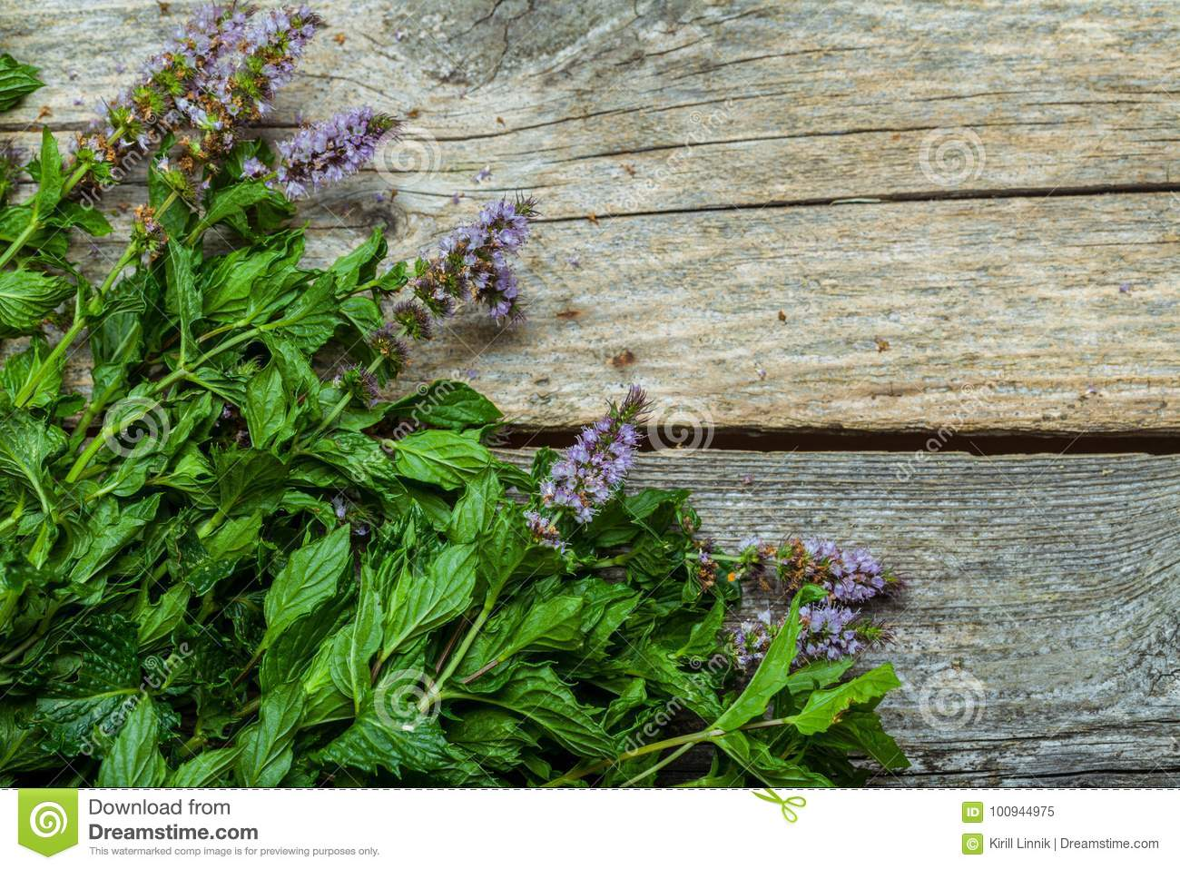 Download Spearmint on the table stock image. Image of fresh, foliage - 100944975