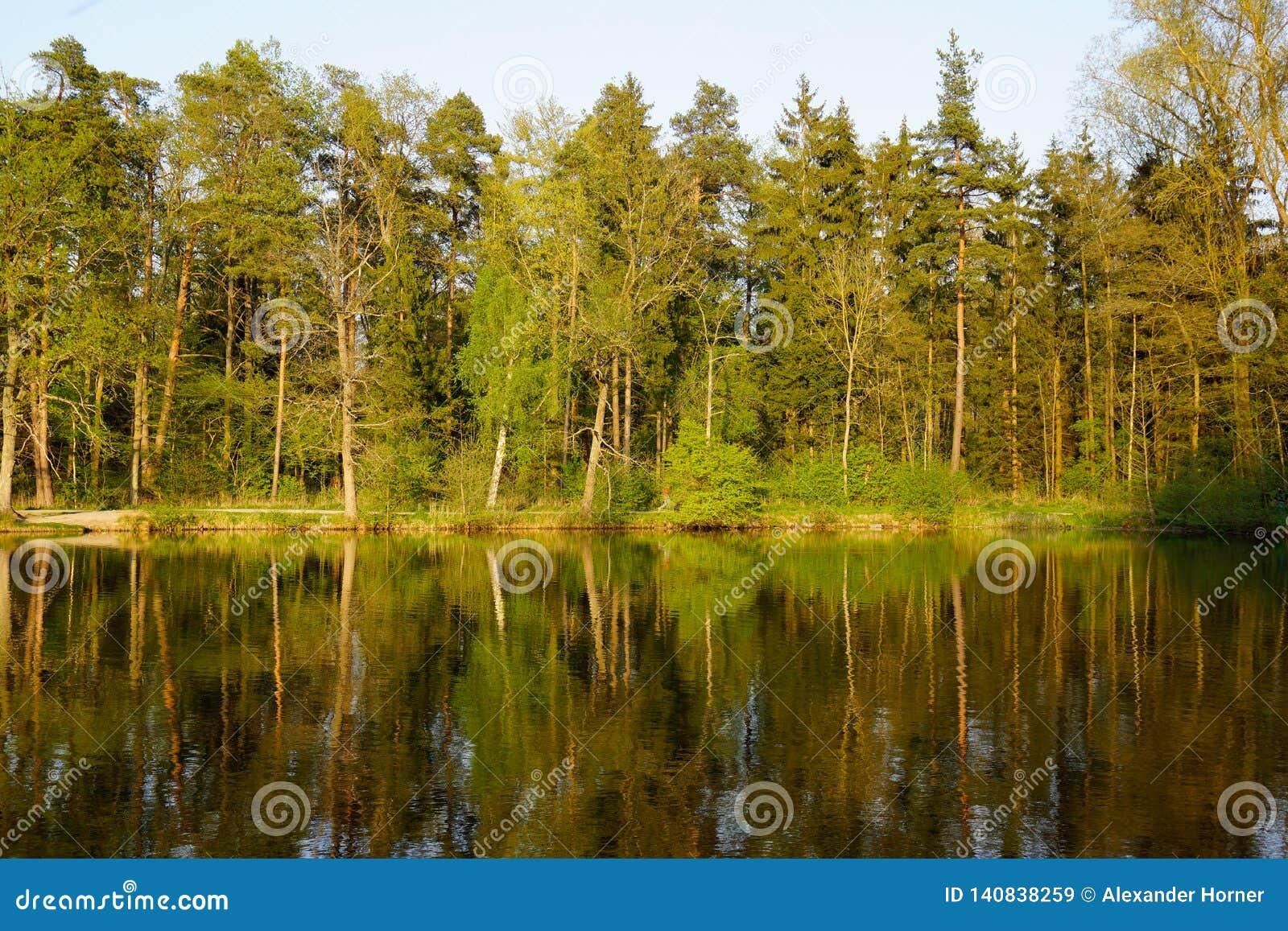 Specchio della foresta in lago al tramonto
