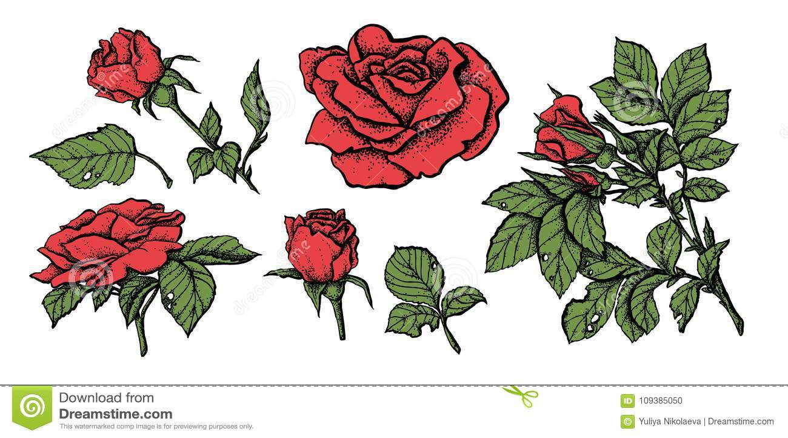 Specificerade hand drog rosor för blommauppsättning högt
