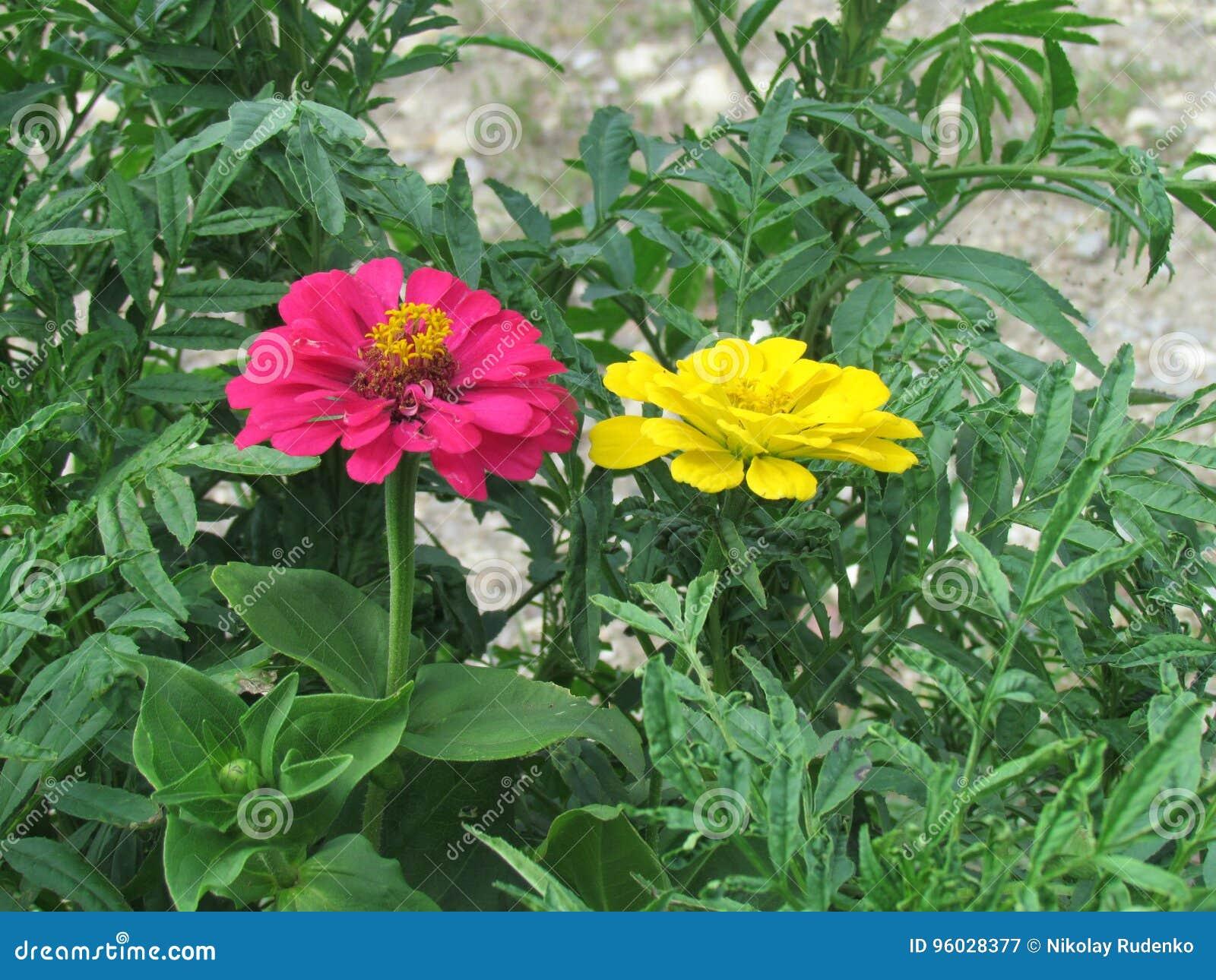 Specjalizuje się kwiaty