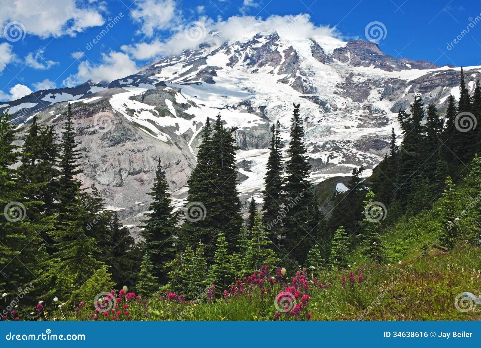 Spectaculaire Mt. Regenachtiger met wildflowers