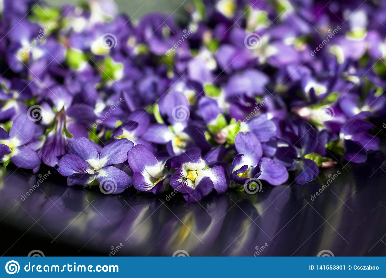 Spectacular, colorful early spring flowers in sunshine in the garden, selective focus, space for text