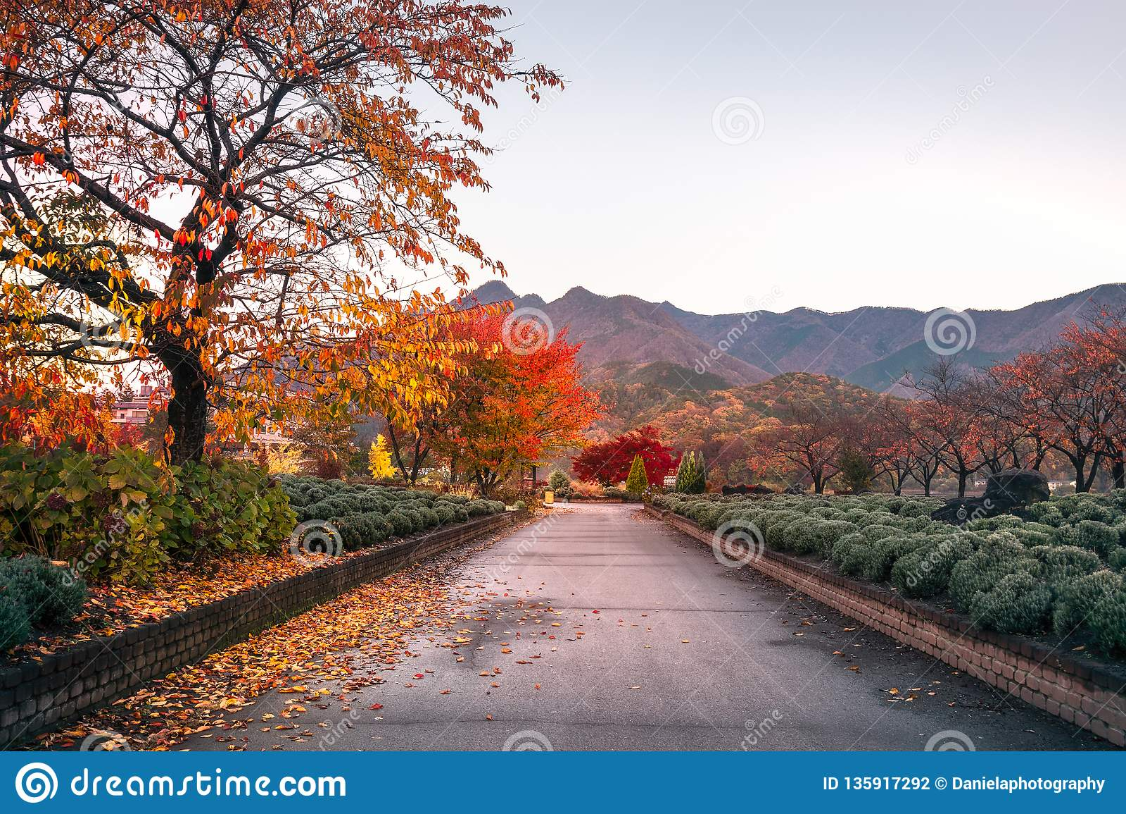 Spectacular morning after sunrise on an autumn path, Japan.