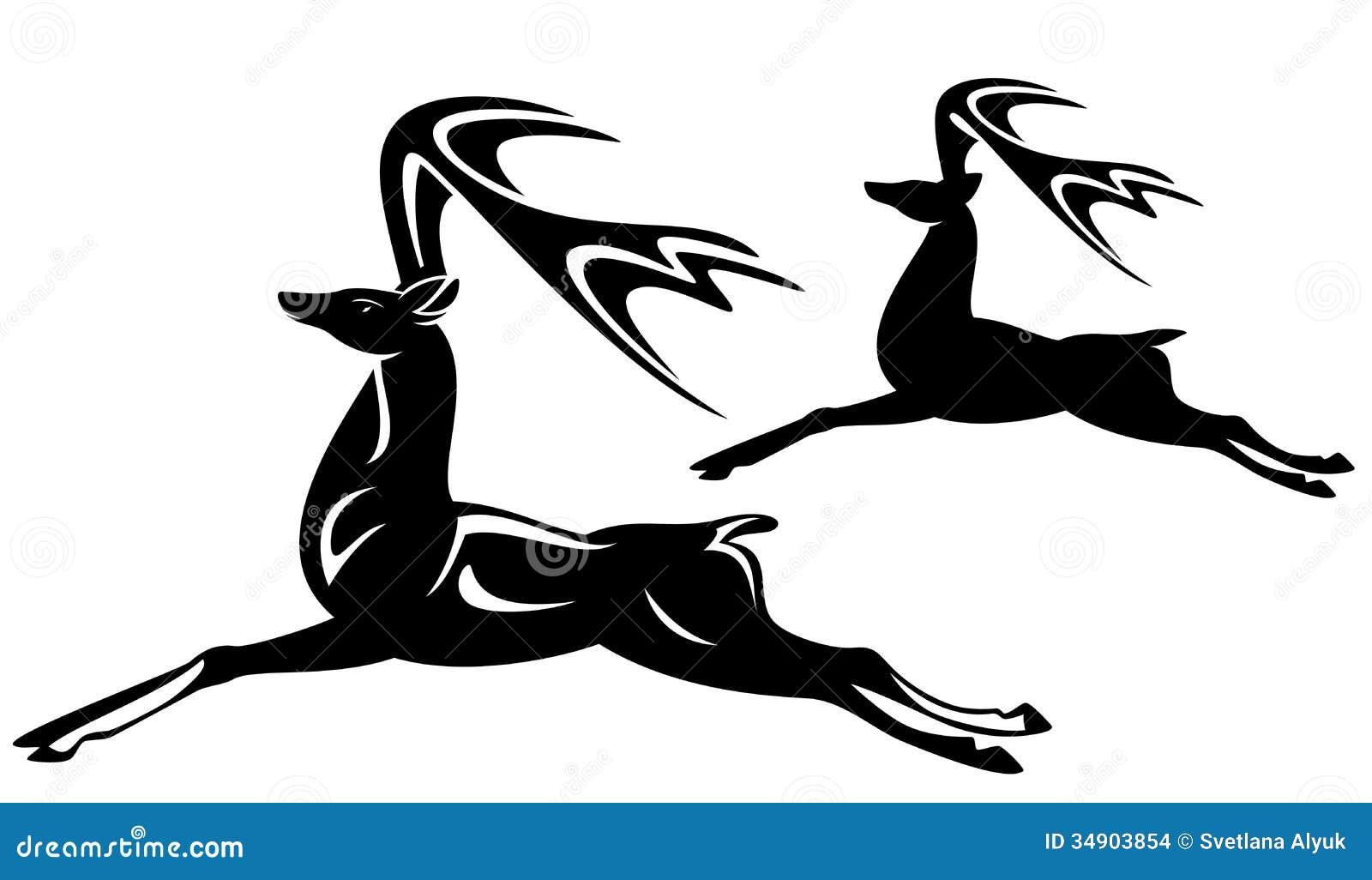 baby gazelle running
