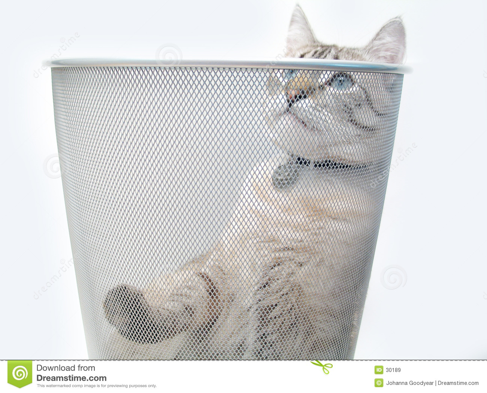 Spel 1 van de kat