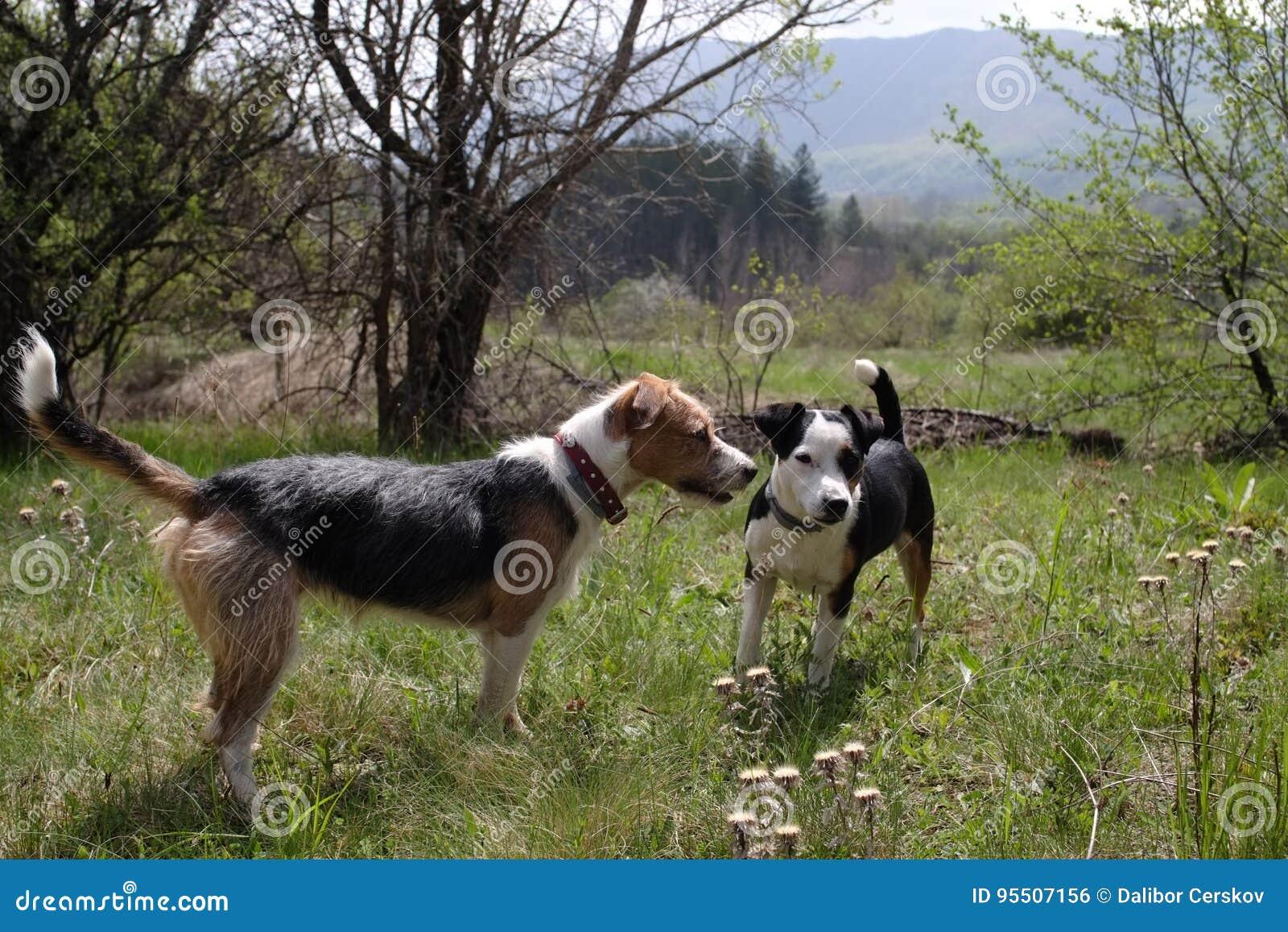 Spela för två gulligt hundkapplöpning