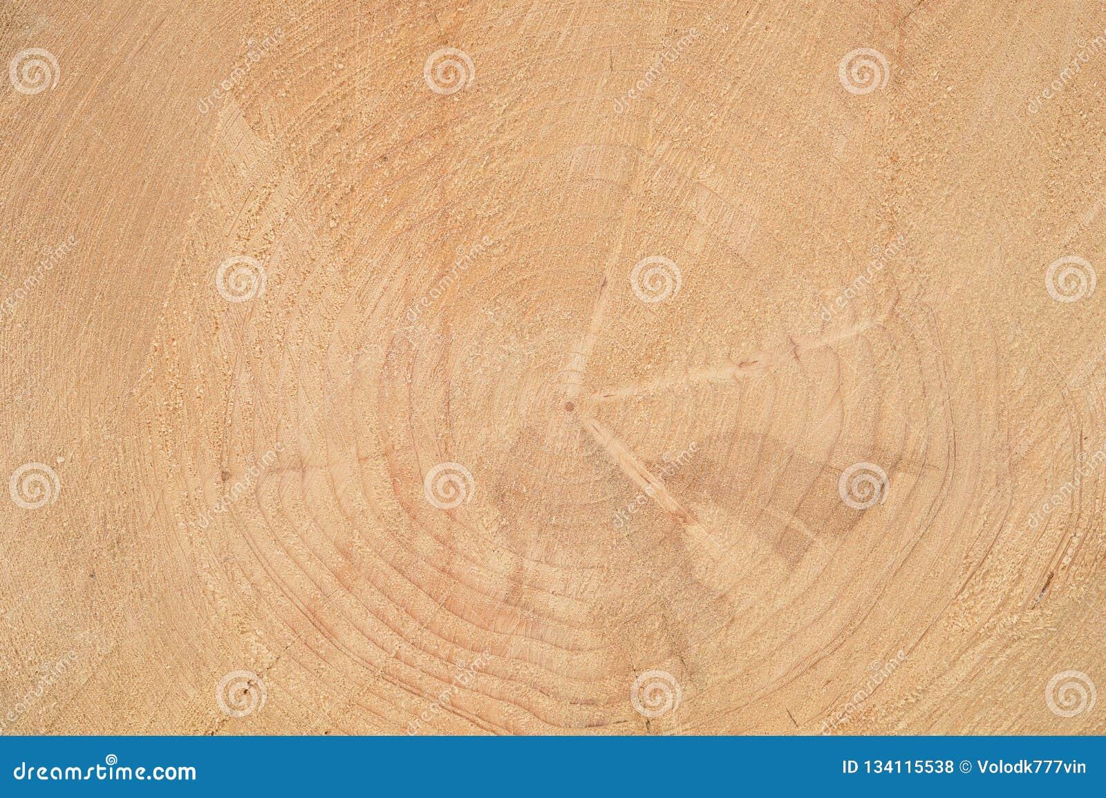 Spelrum med lampa Årliga cirklar på framsidan av trädet