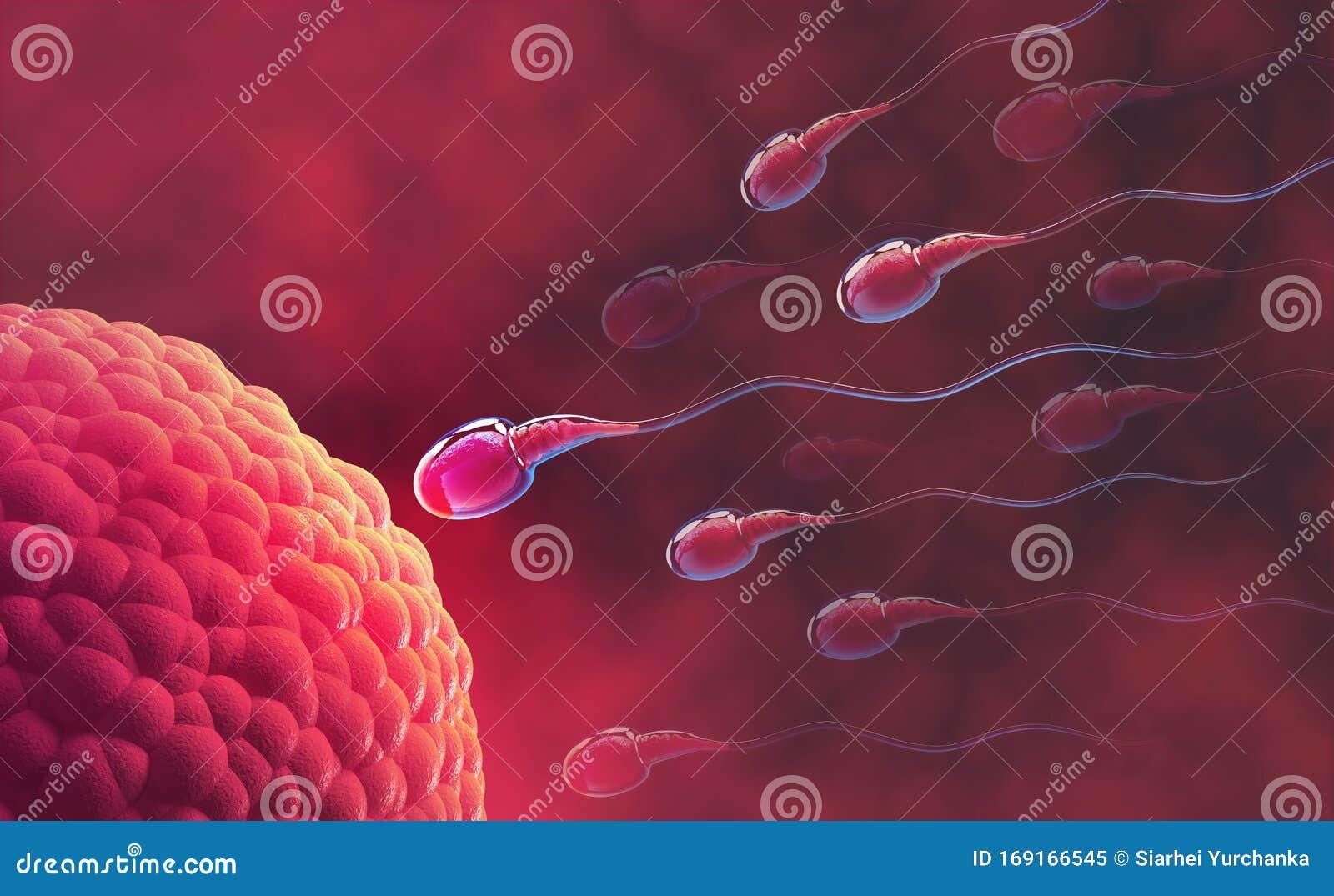 Mikroskop spermien
