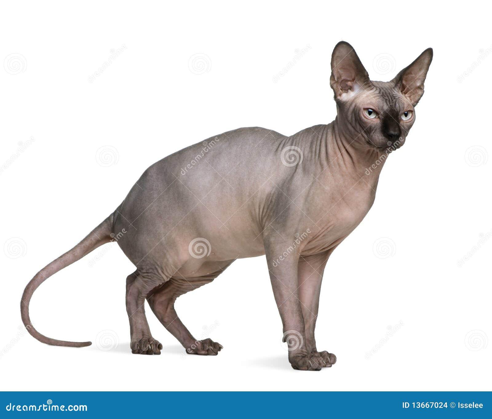 emory cat board