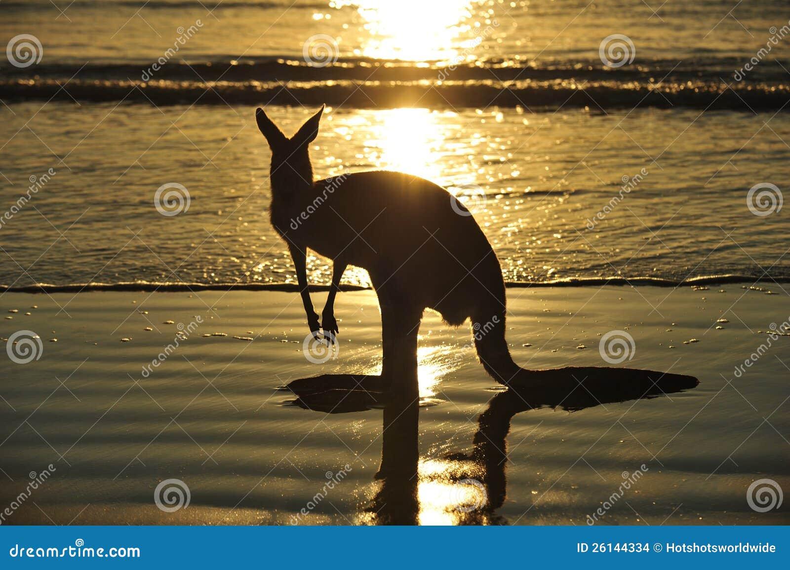 Spiaggia australiana del canguro della siluetta mackay for Disegni moderni della casa sulla spiaggia
