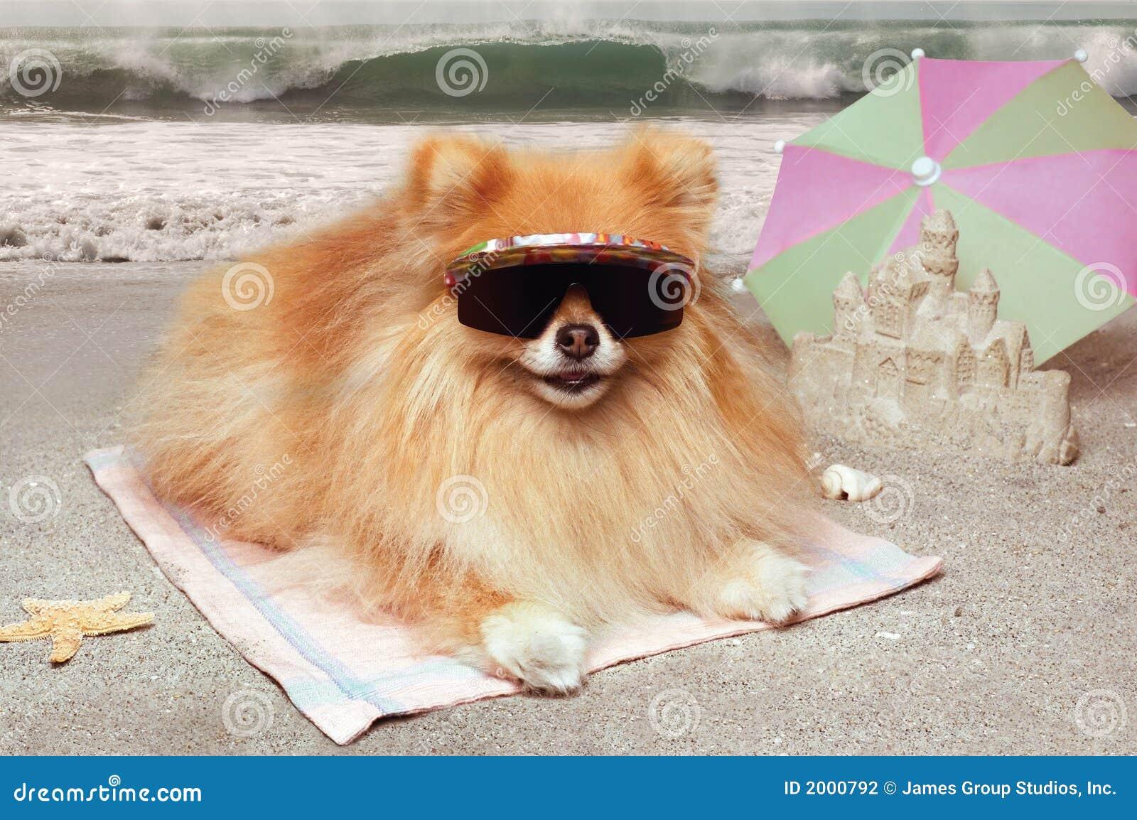 Spiaggia del cane