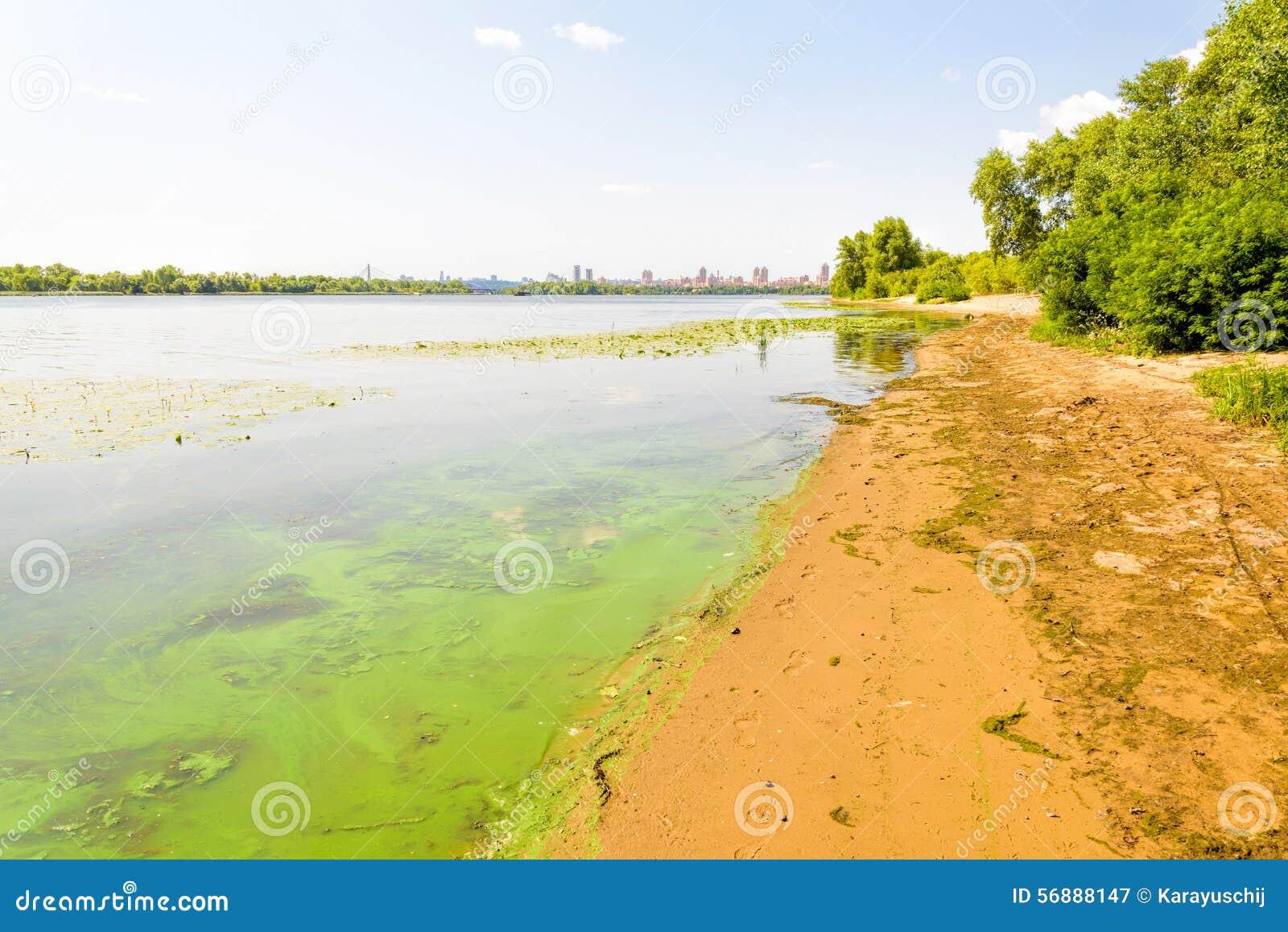 Spiaggia del fiume di Dnieper