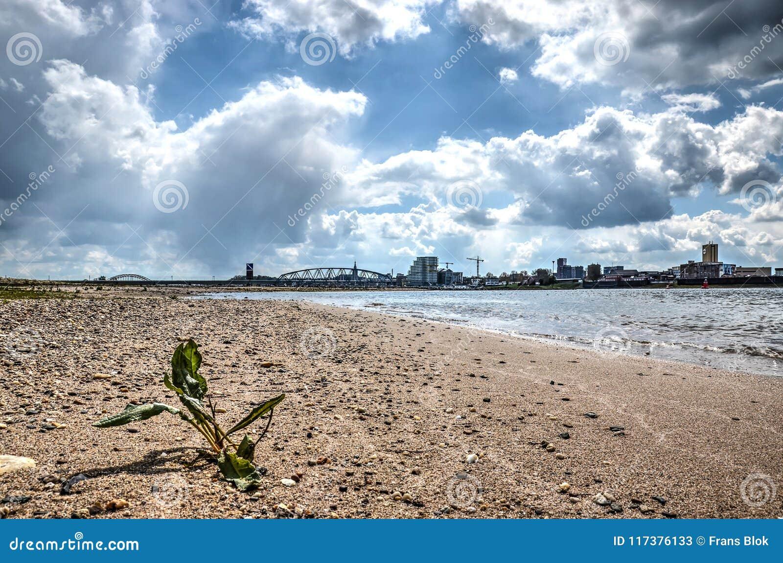 Spiaggia del fiume Waal