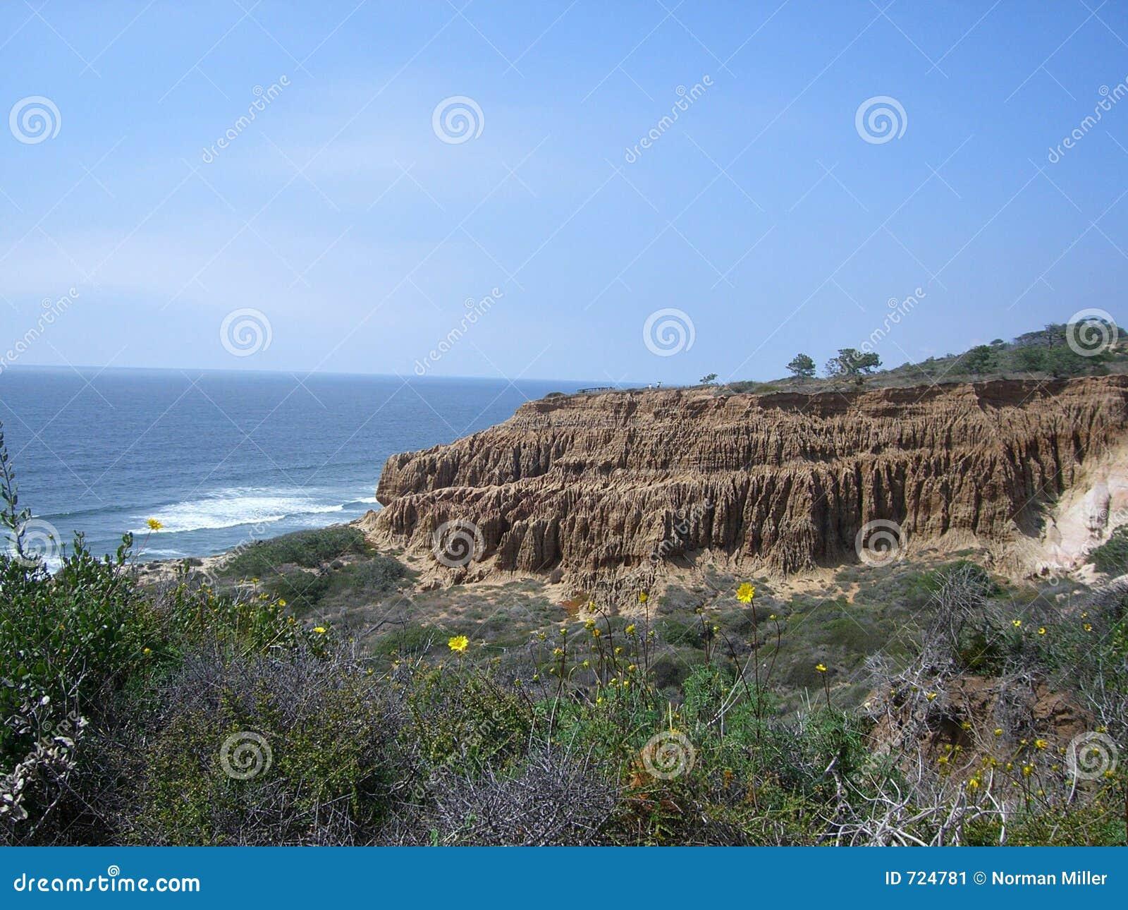 Spiaggia di condizione dei pini di Torrey