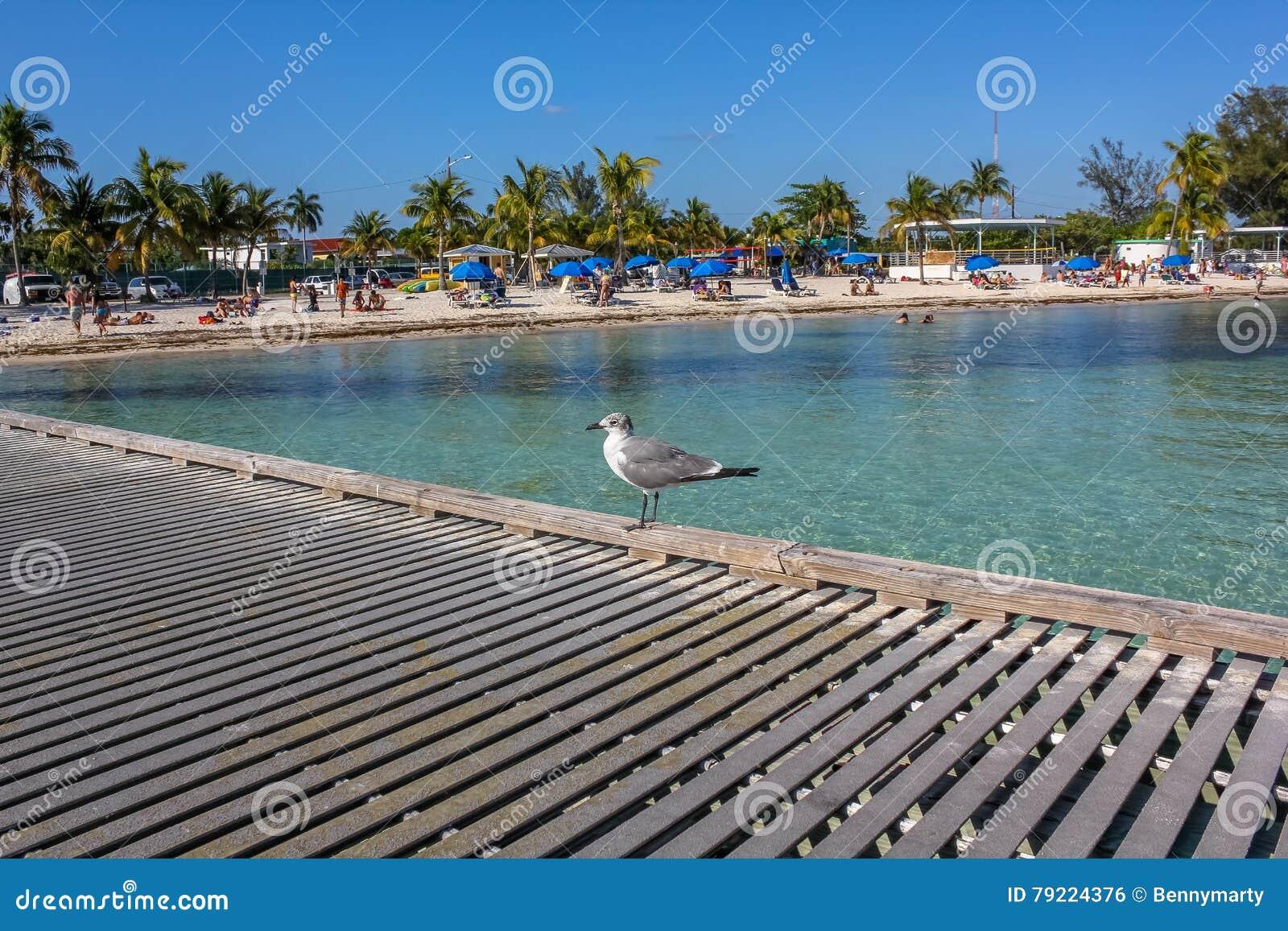 Spiaggia Florida di Higgs