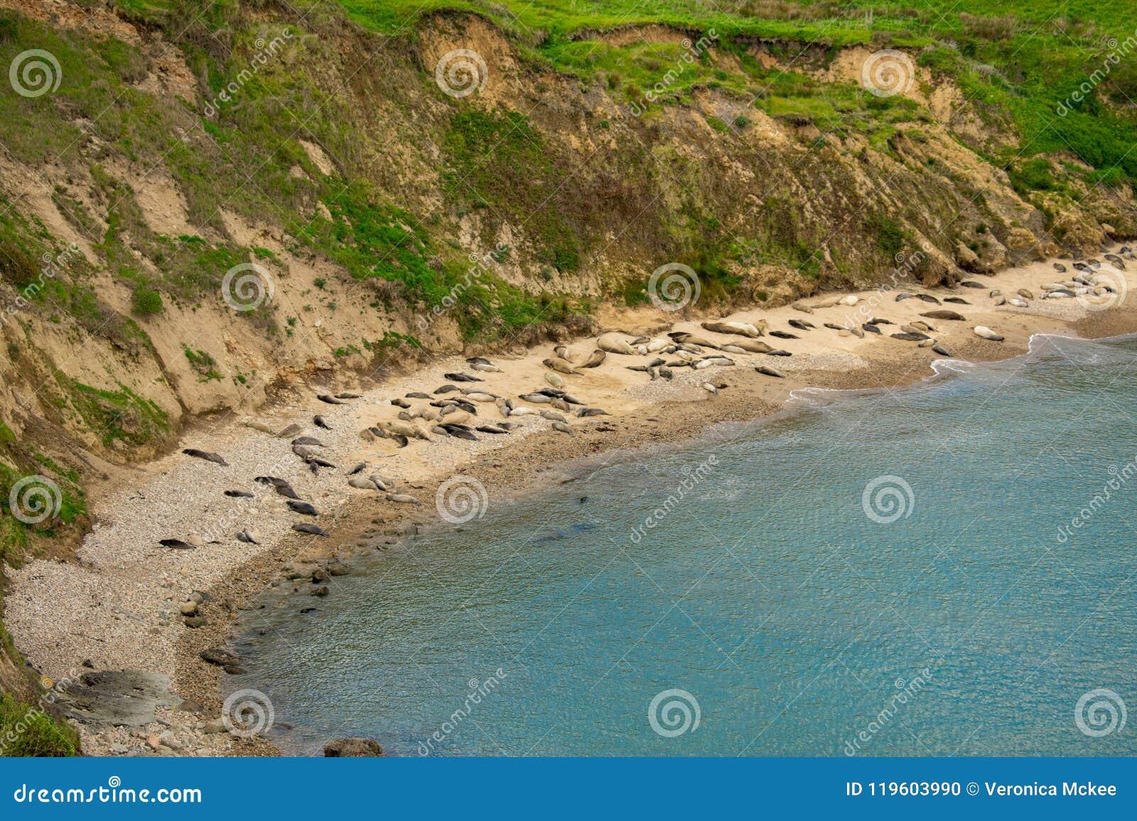 Spiaggia nazionale di Reyes del punto in California
