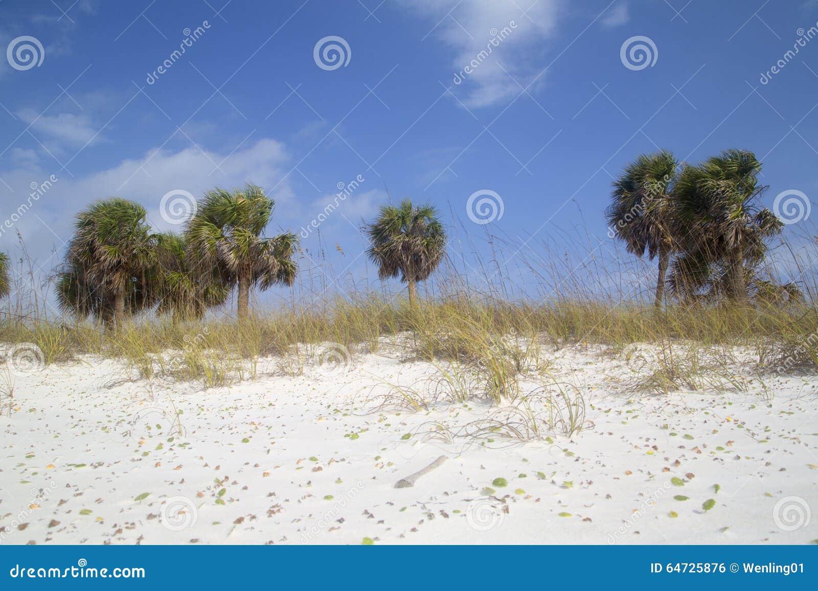 Spiaggia sabbiosa bianca con il fondo delle palme