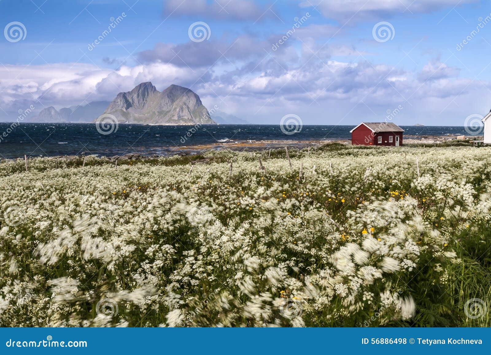 Spiaggia scenica sulle isole di Lofoten