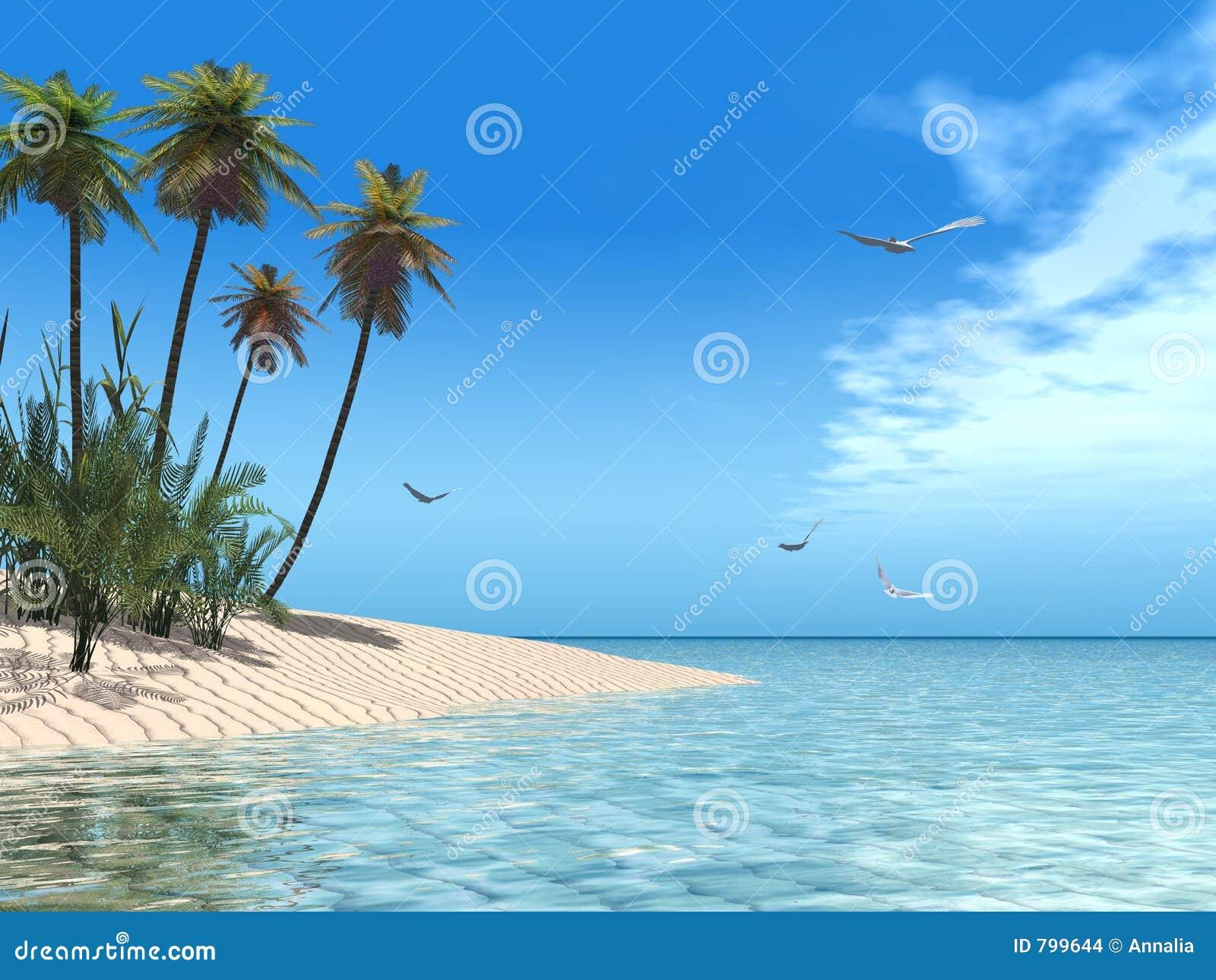 Spiaggia tropicale immagini stock immagine 799644 for Disegni di casa sulla spiaggia tropicale