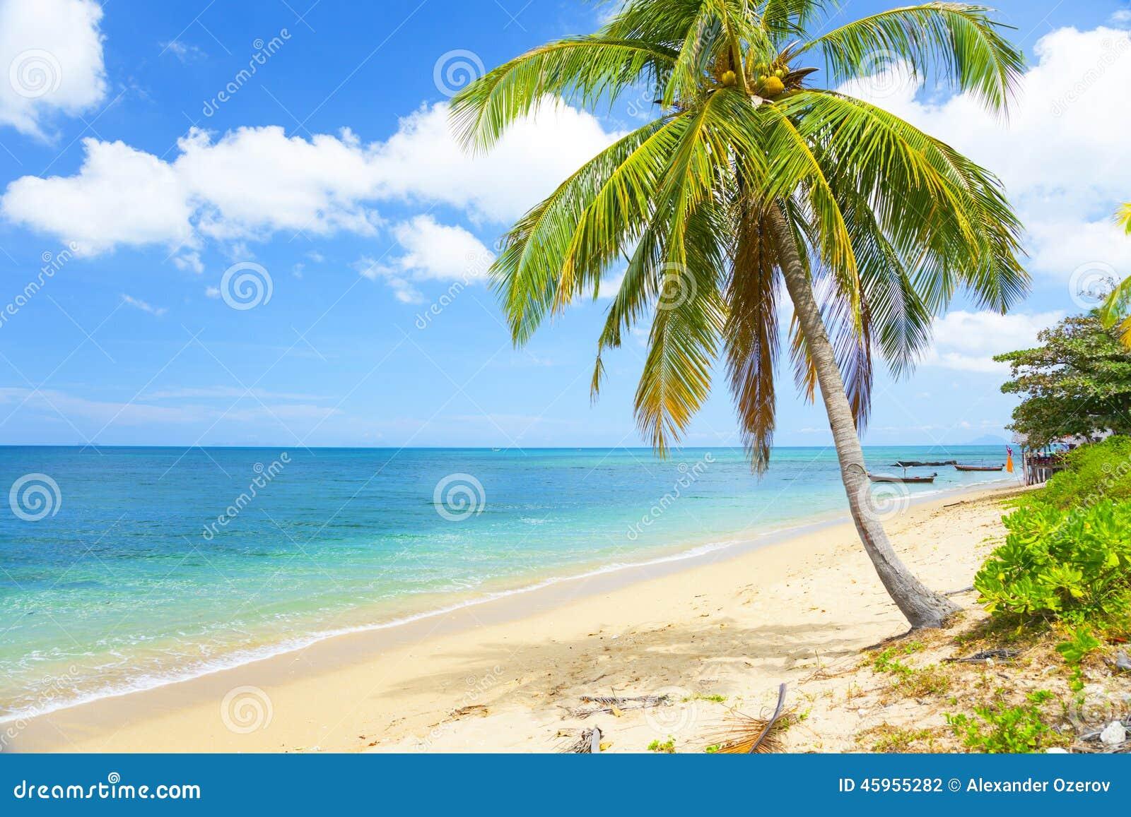 Spiaggia tropicale con la palma di noce di cocco