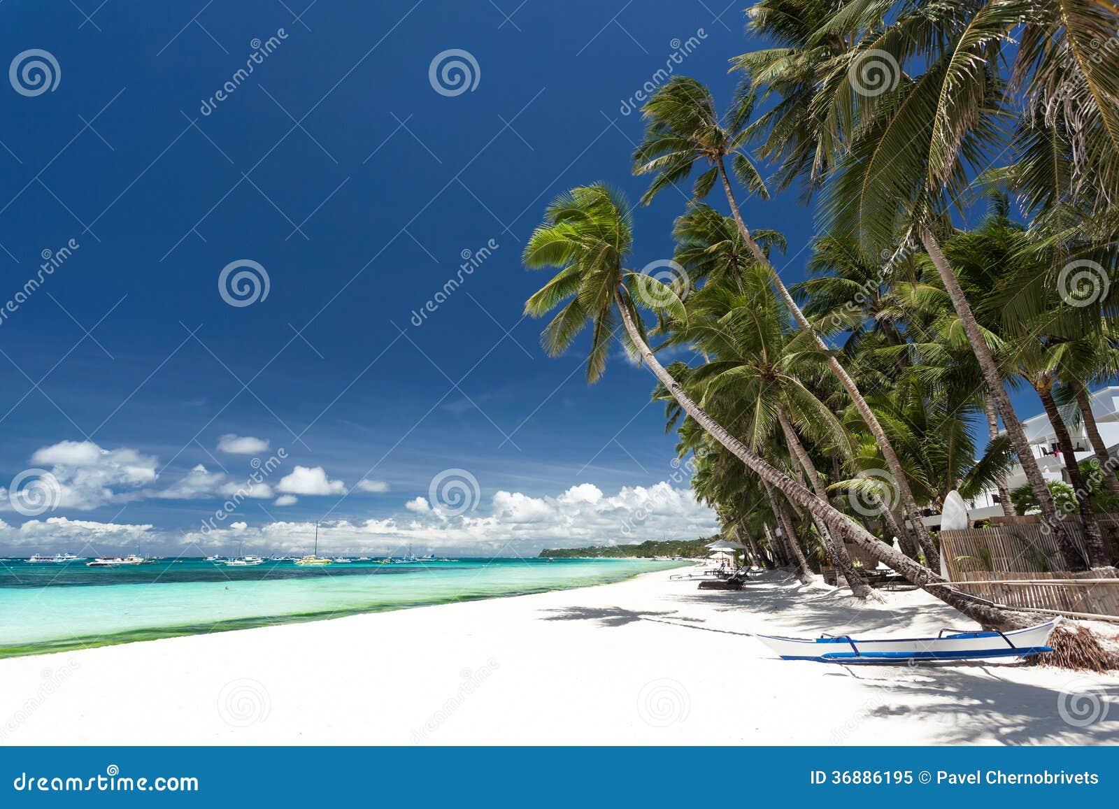 Download Spiaggia Tropicale Con La Palma E La Sabbia Bianca Immagine Stock - Immagine di cielo, litorale: 36886195