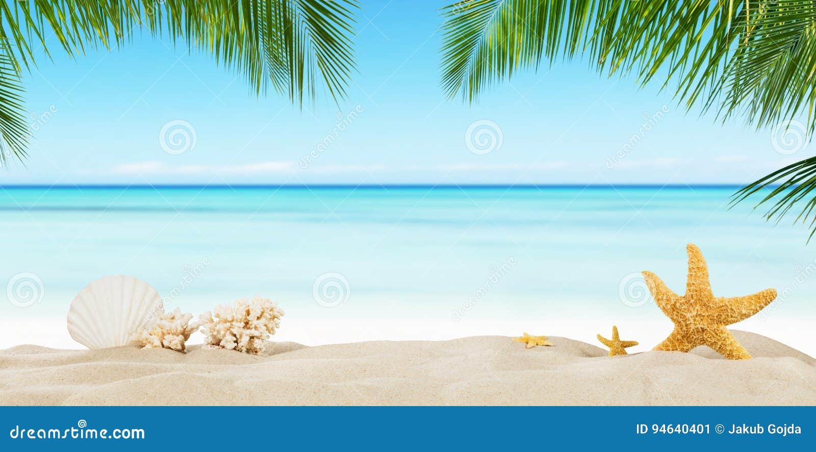 Spiaggia tropicale con la stella di mare sulla sabbia, fondo di vacanza estiva