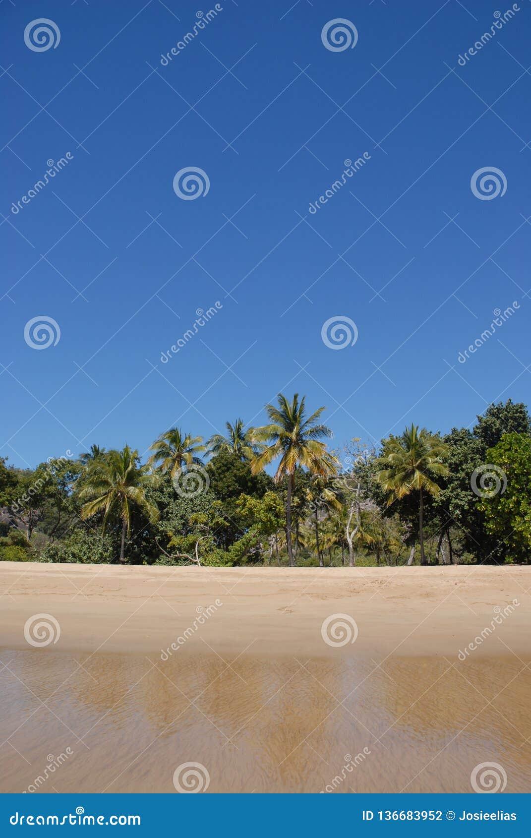 Spiaggia tropicale nel Queensland del nord lontano, Australia