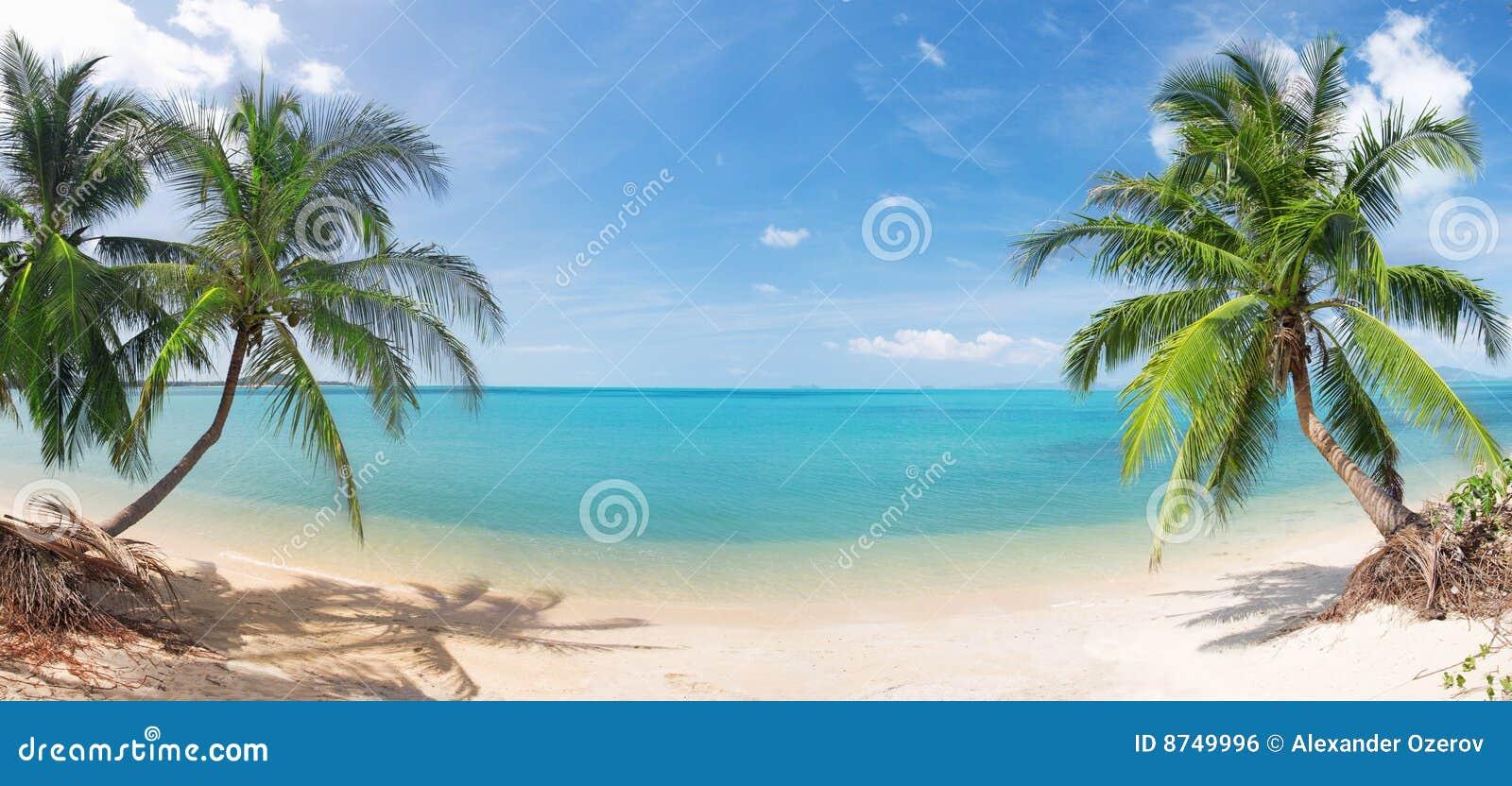 Spiaggia tropicale panoramica con la palma di noce di cocco