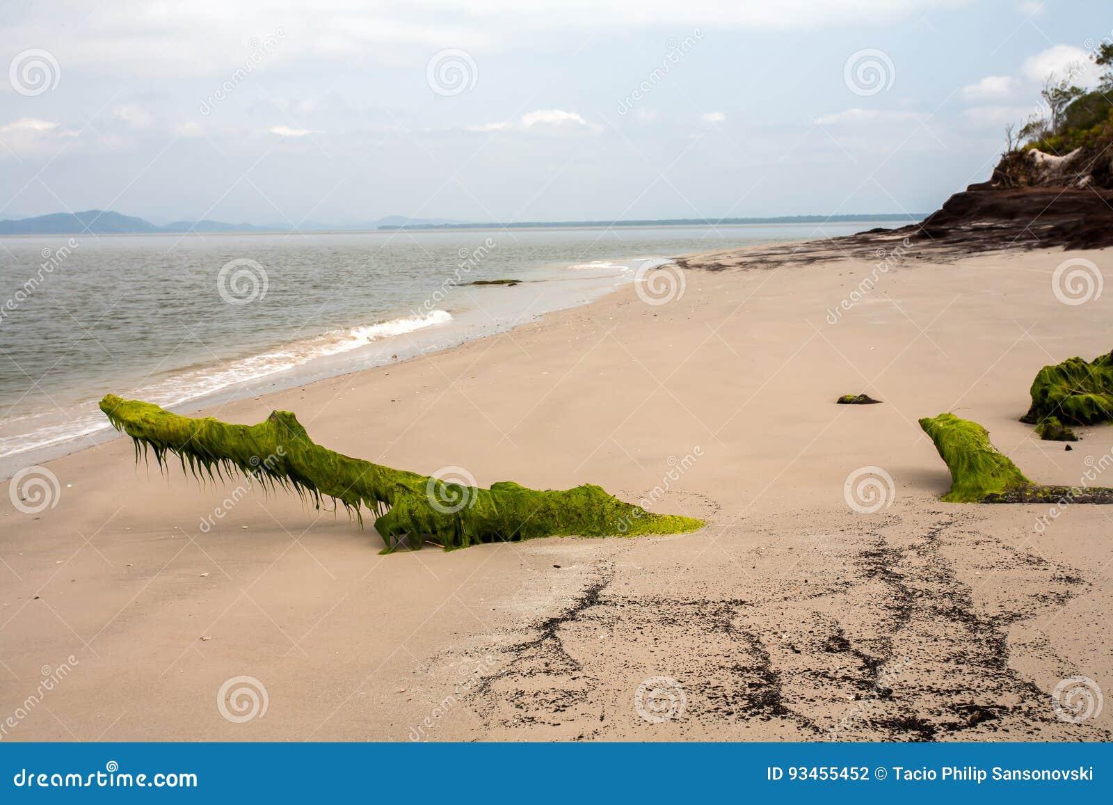 Spiaggia vuota con i tronchi coperti di alga