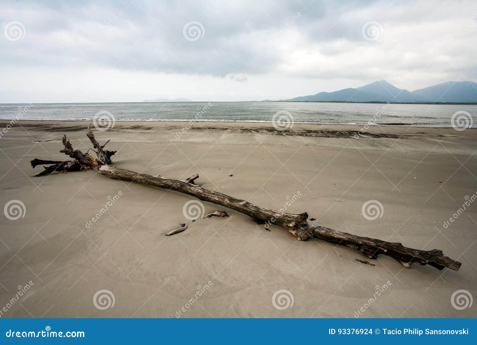 Spiaggia vuota con i tronchi nella sabbia nel Brasile