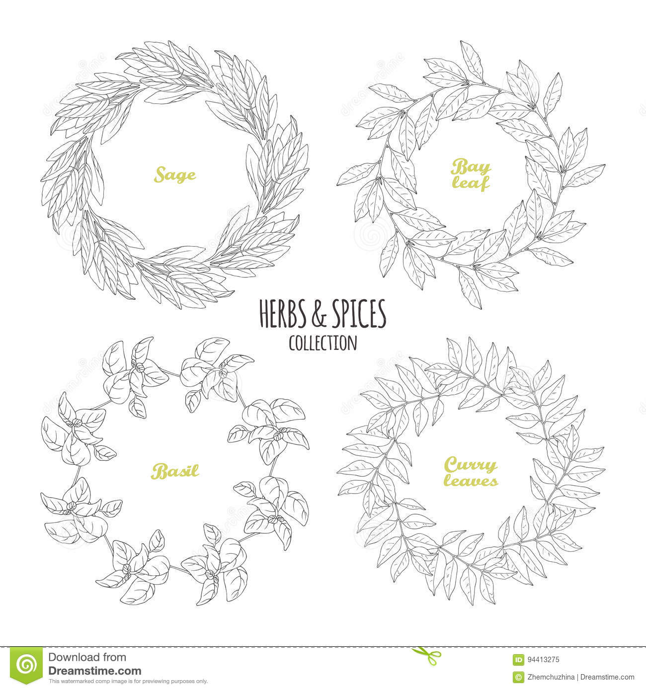 Spicy Herb Circle Frames Collection. Hand Drawn Sage, Bay Leaf ...