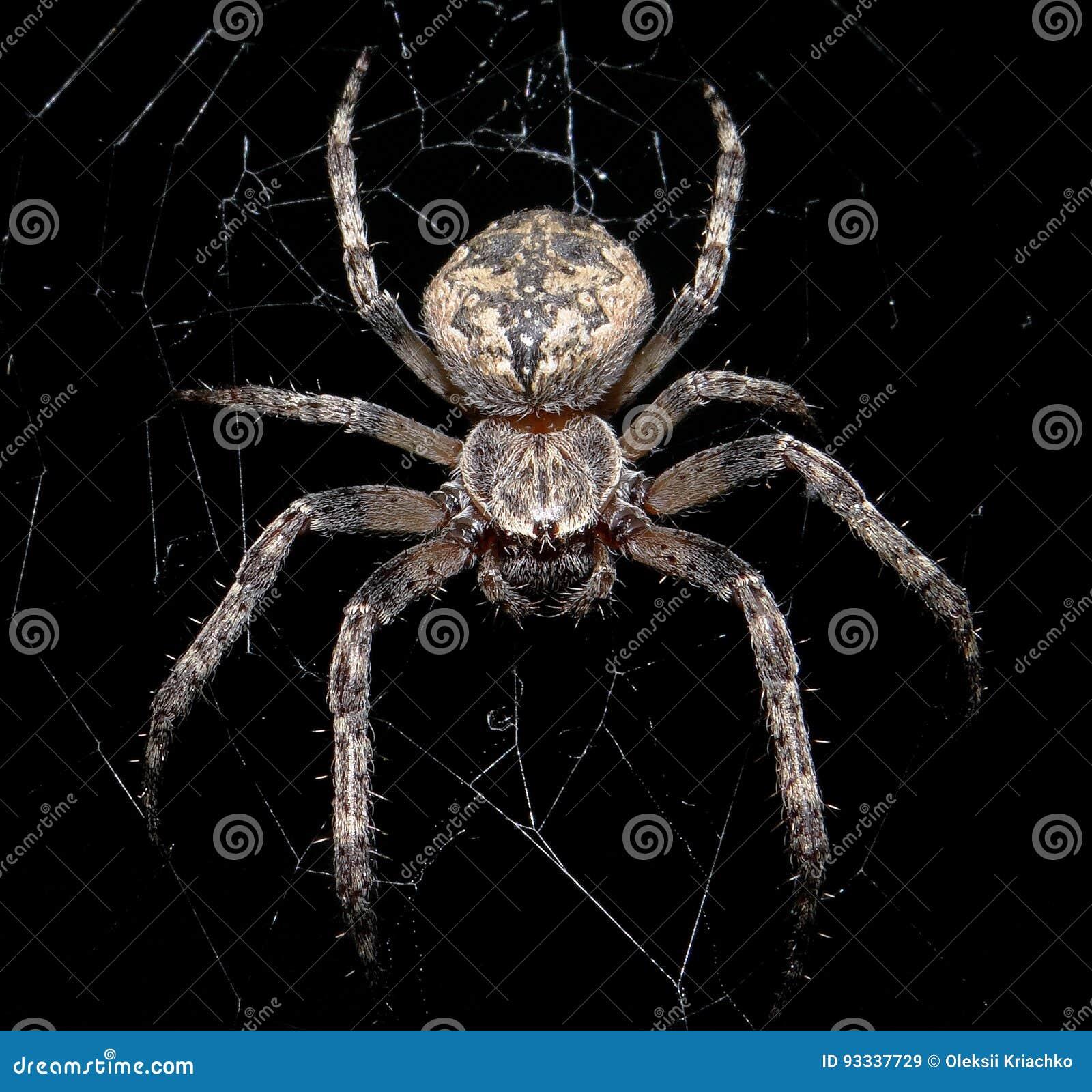 Download Spider stock image. Image of arachnids, snare, victim - 93337729