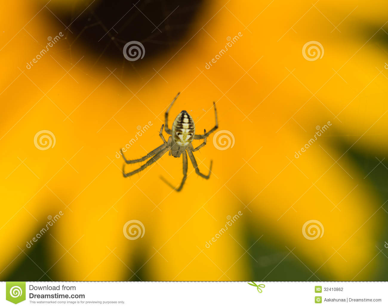 The Spider Stock Photography Image 32410862