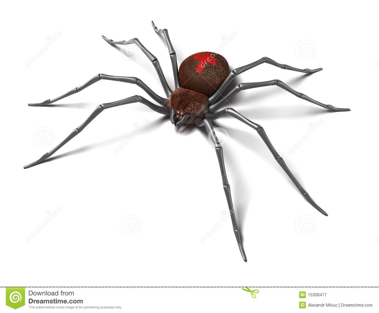 Spider : Black Widow. Isolated On White Surface Stock Illustration ...