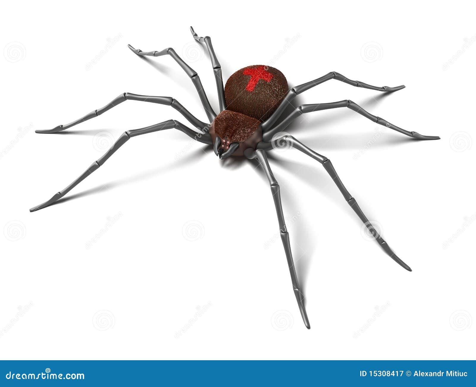 White Black Widow Spiders | www.imgkid.com - The Image Kid ...