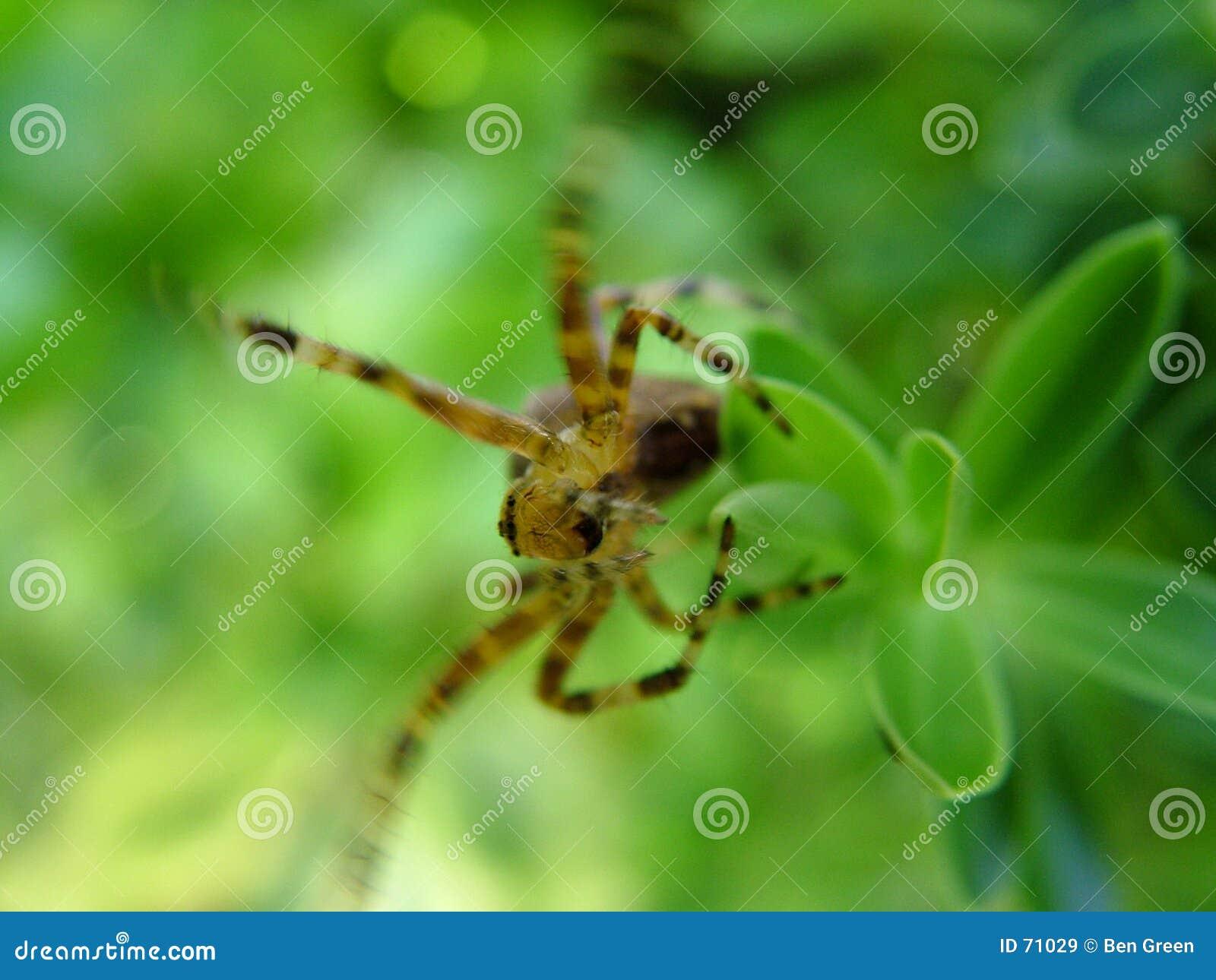 Spider on bush